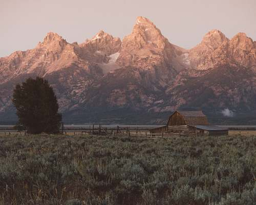 grand teton brown wooden barn near tall dress at daytime mountain range